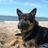 german_shepherd profile