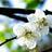 @plum_blossom_r
