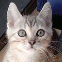 ベンガル猫のレム@Rem channel🐾