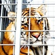 Cirkusy bez zvířat