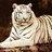 tiger_daughter
