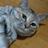 The profile image of miti_0213