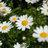 spring0811