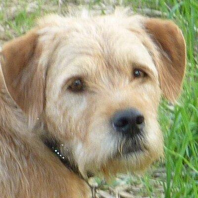 Hond Harrie   Social Profile