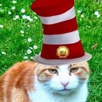 Ginger Cat | Social Profile