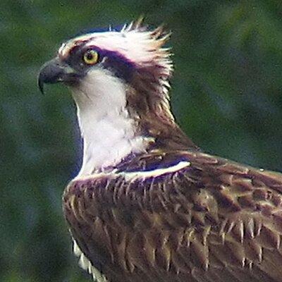 Rutland Ospreys   Social Profile