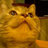 The profile image of nikoichi_rinko