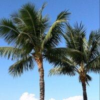 ORG.HAWAII | Social Profile