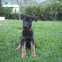 Dogs in Brazil | Social Profile