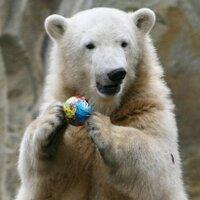 wildbear03