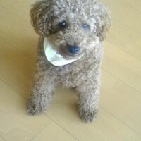 Muffin | Social Profile