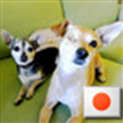 ちゅーちゅー&パンプキン | Social Profile