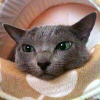 Yasuko F Iwaori   Social Profile