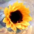 Sunflower Social Profile
