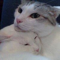 cat7 | Social Profile