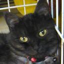 Cat01 reasonably small