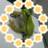 amagaeru_oiso