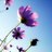 flower_seed