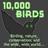 10000birds