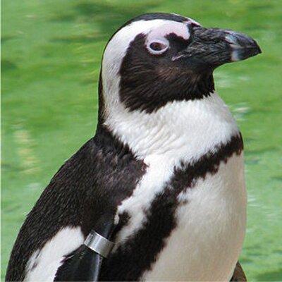 LeRoy Z. Penguin | Social Profile