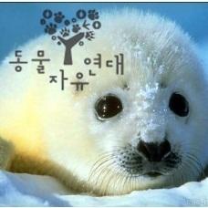 동물자유연대 하프물범 캠페인 Social Profile