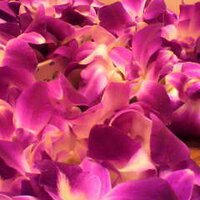 flowerdish | Social Profile
