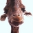 @Giraffe_Head