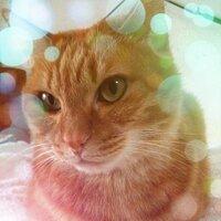平井孝典 | Social Profile