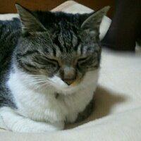 猫にん | Social Profile