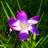 violetasarg