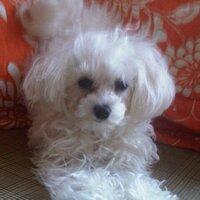 Daisy Mae | Social Profile