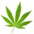 Weed_Quotes profile