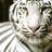 Whyte_Tyger profile