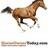 @HorseOwnerToday