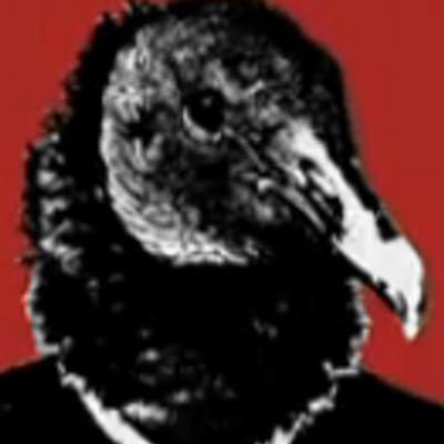 Vulturemania   Social Profile