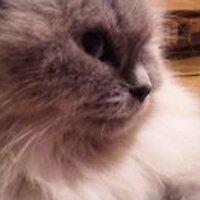 きーさ ki-sa | Social Profile