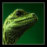patrick green | Social Profile