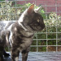 Spot Cat | Social Profile