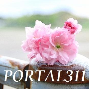 portal311 Social Profile