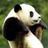 The profile image of matsuririi
