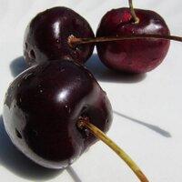 cherry | Social Profile