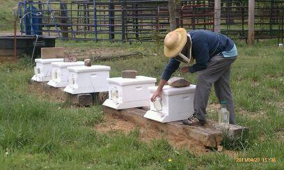 HoneybeesToday Social Profile