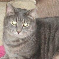 Toni Cat | Social Profile
