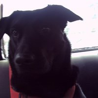 Deep Dark Dog | Social Profile