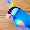 タロブン🌈🐥🐥Java sparrow freak
