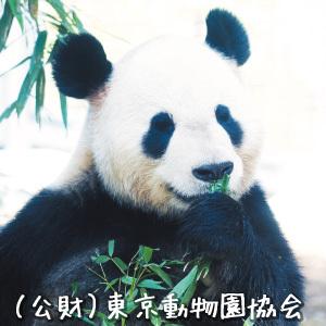 パンダ撮影隊@上野動物園 Social Profile