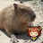 みずポン@福岡   Social Profile