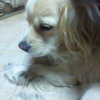 葉桜 | Social Profile