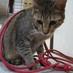 kittennyan