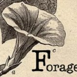 forage | Social Profile
